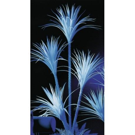 UV Juka, výška 180cm