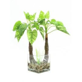 Pothos ve skle, 26 listů, 50cm