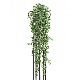 Břečťan šlahoun klasický zel./bílá,100cm