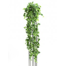 Pothos šlahoun, 160 cm