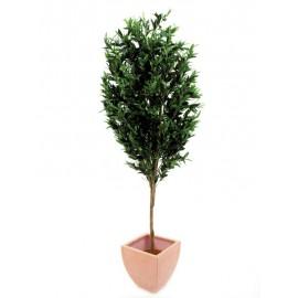 Olivovník s olivami, 200 cm