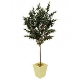 Olivovník s olivami, 250 cm