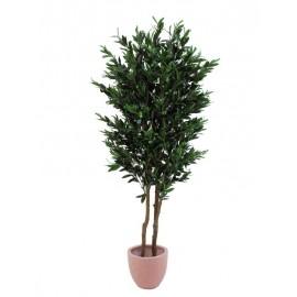 Olivovník, 2 kmeny s olivami, 165 cm