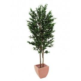 Olivovník 2 kmeny s olivami, 200 cm